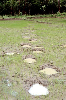 Elephant foot prints